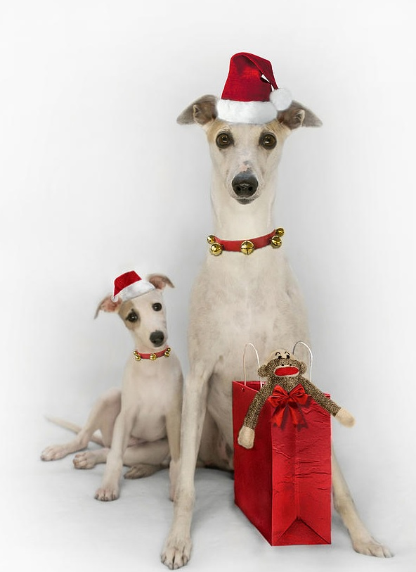 Get Personal with your Family Pet Christmas Card Design this season, by using a Digital Photo Retouching Business to deliver the professionally Photoshopped goods.