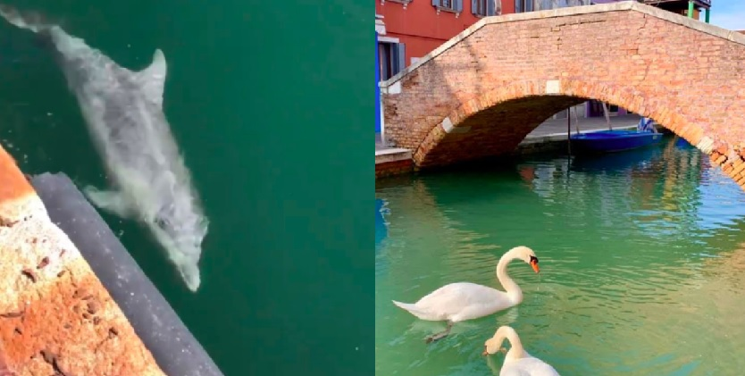 Swans and dolphins enjoying lockdown life, but NOT as the media would have you believe. In terms of geographical bearings.